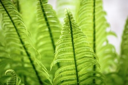בריאות מהטבע: כלורופיל נוזלי